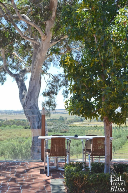 Olive grove views