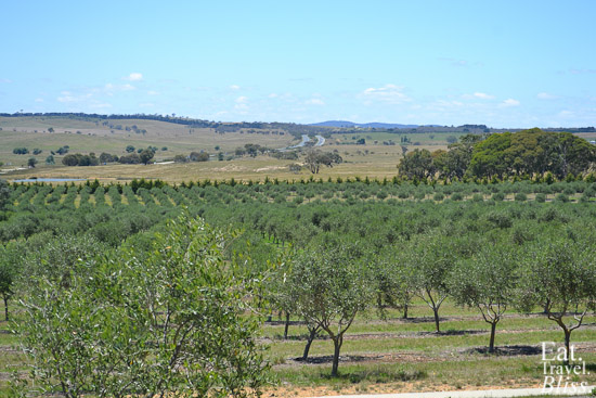 Overlooking the Fedra Olive Grove
