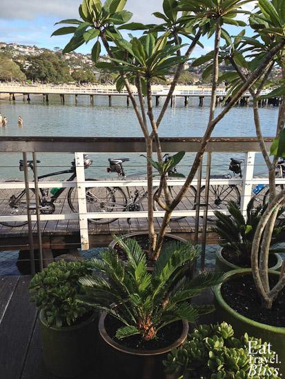 Balmoral Boatshed - plants
